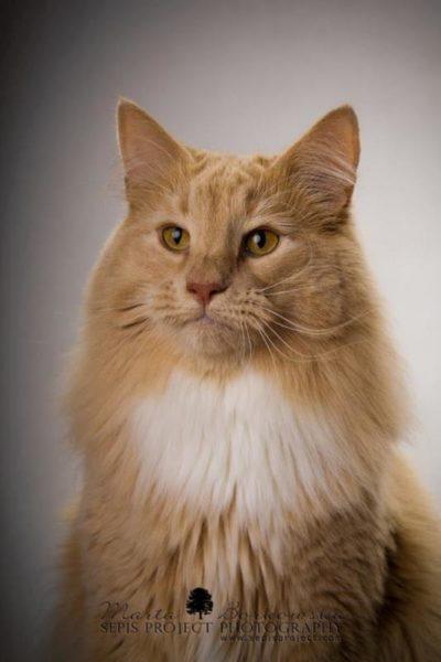 Tomcat Chester