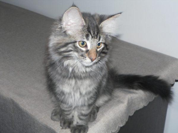 Kot - Kittten