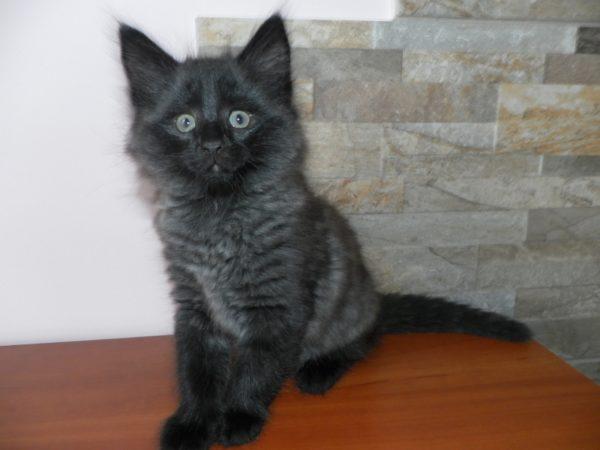 Kot - Kociak